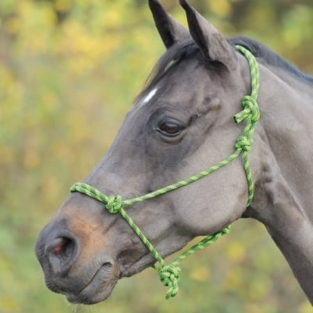 Shires Adjustable Rope Halter, Lime & Black - One Size