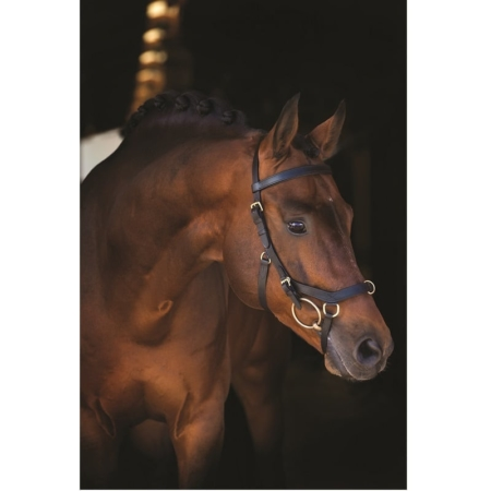 Rambo® Micklem Multi Bridle