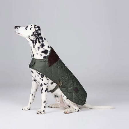 quilted dog coat MODEL