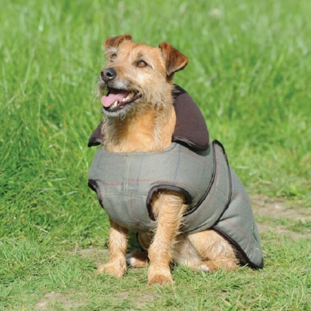 WeatherBeeta Tweed Dog Coat, Olive