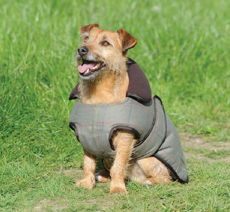 WeatherBeeta Tweed Dog Coat, Olive
