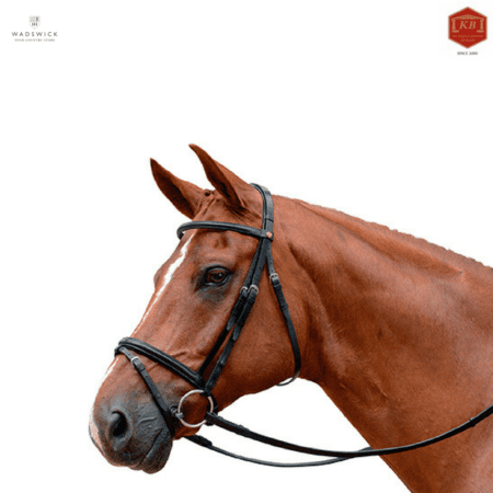 Albion KB Competition Flash Noseband Bridle