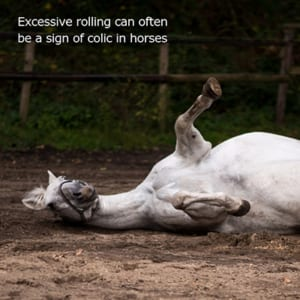 Practical Tips to Aid Colic Prevention in Horses. How to Spot the Signs of Colic in Horses