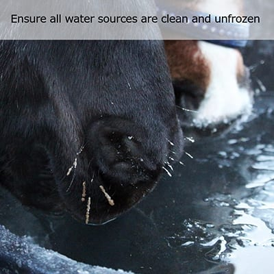 Tips for feeding your horses over winter from Wadswick Country Store