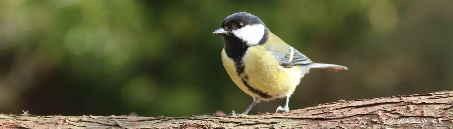 How to Attract Wild Birds to Your Garden