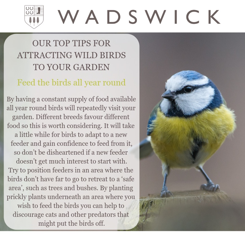 How to attract wild birds to your garden - RSPB Bird Watch - Wadswick Country Store