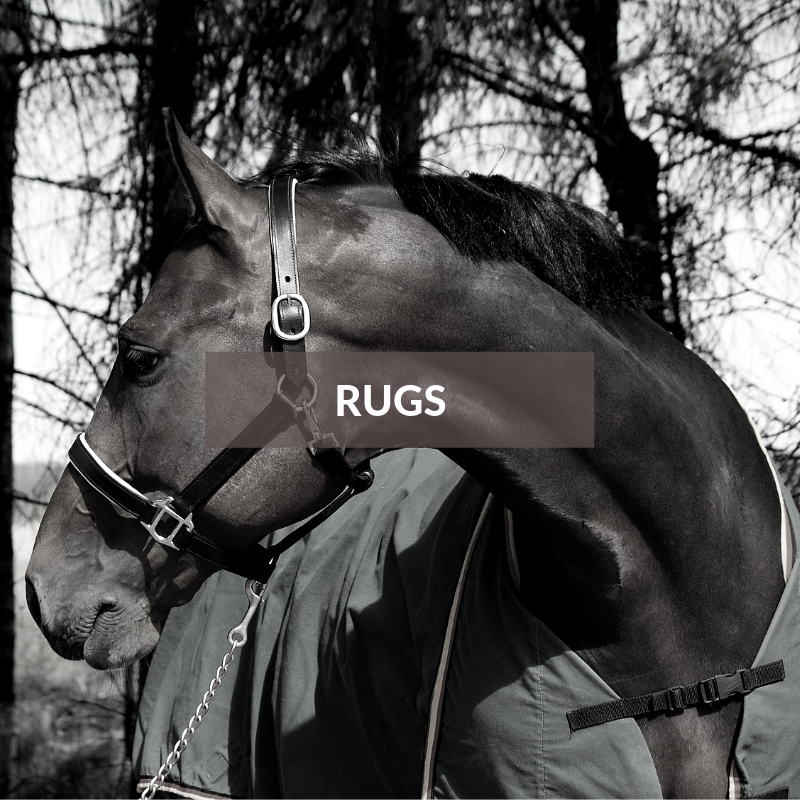 Horse Section - Rugs