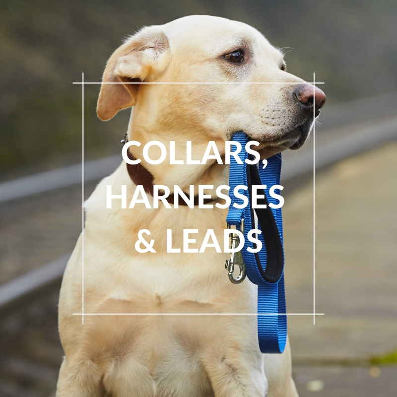 Dog Section - Collars, Harnesses & Leads