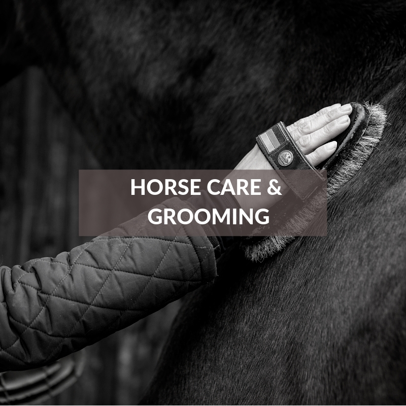 Horse section - Horse Care & Grooming