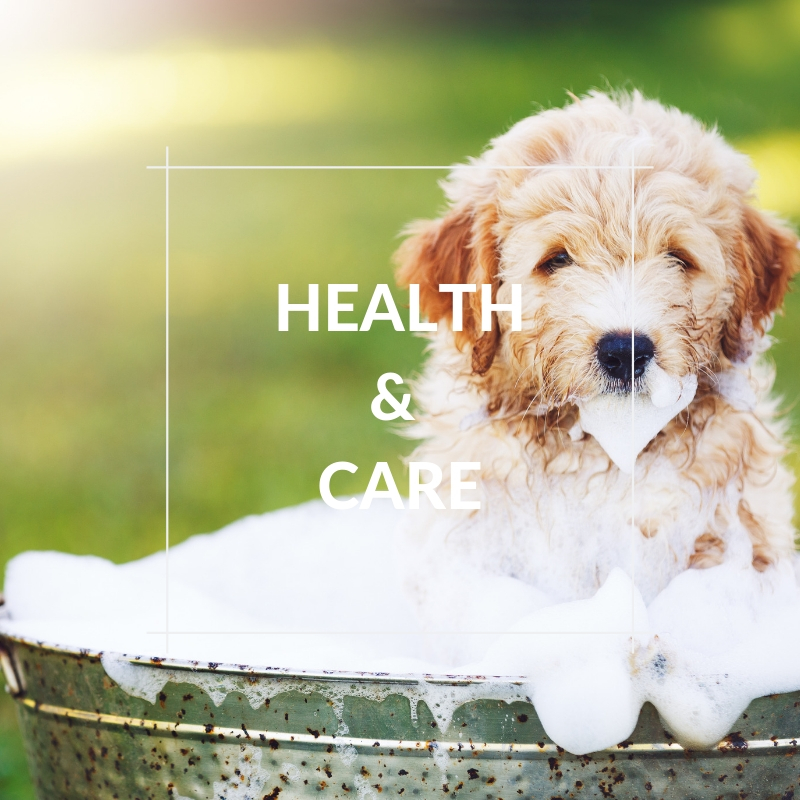 Dog Section - Health & Care