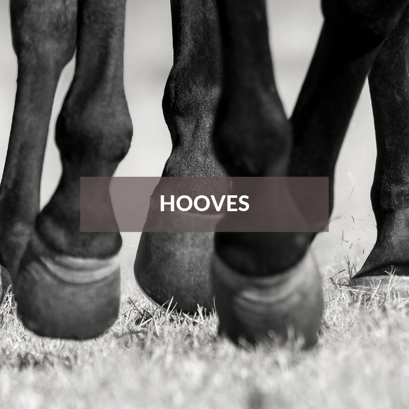 Horse Care & Grooming Area Hooves
