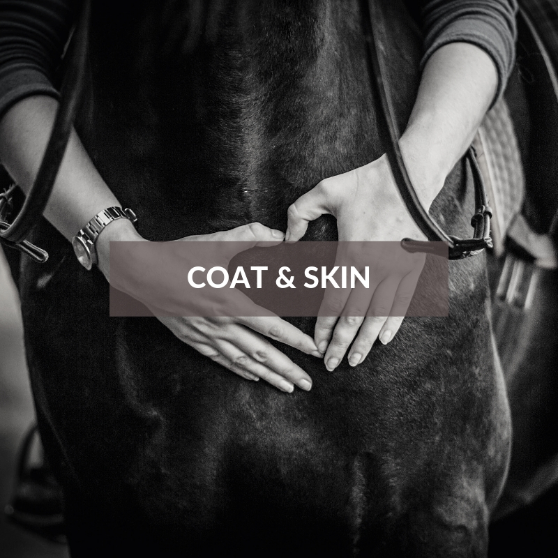 Horse Care & Grooming Area Coat & Skin