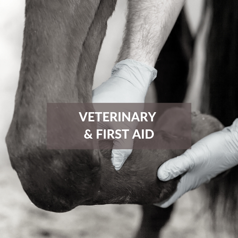 Horse Care & Grooming Area Veterinary & First Aid