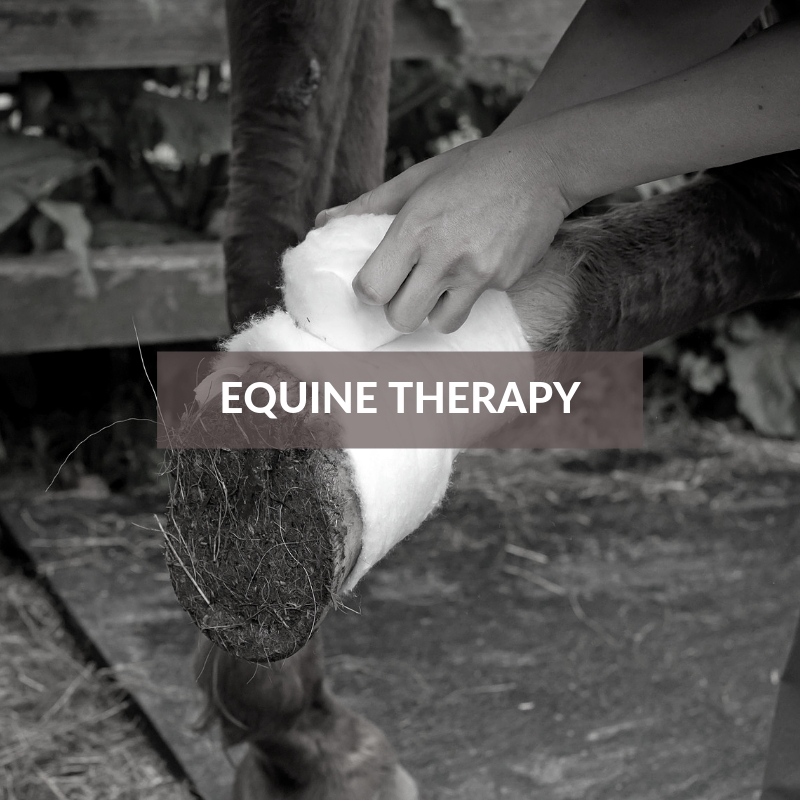 Horse Care & Grooming Area Equine Therapy