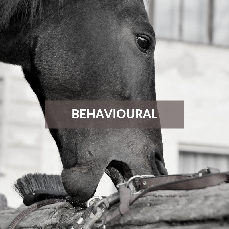 Horse Care & Grooming Area Behavioural