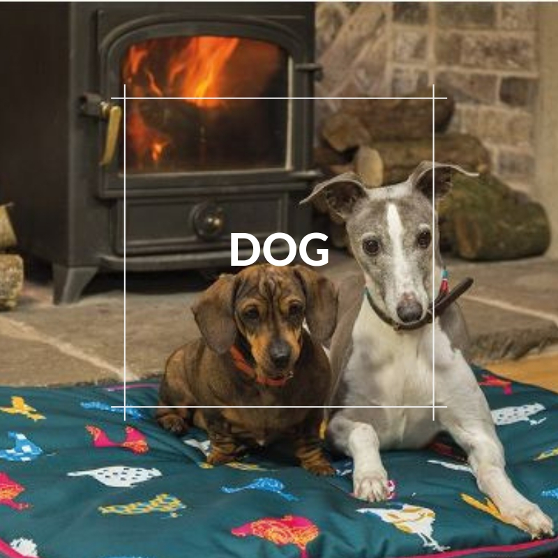 Pet Images - Dog Section