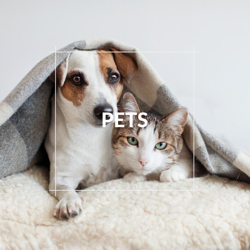 Pets & Smallholder - Pet Image