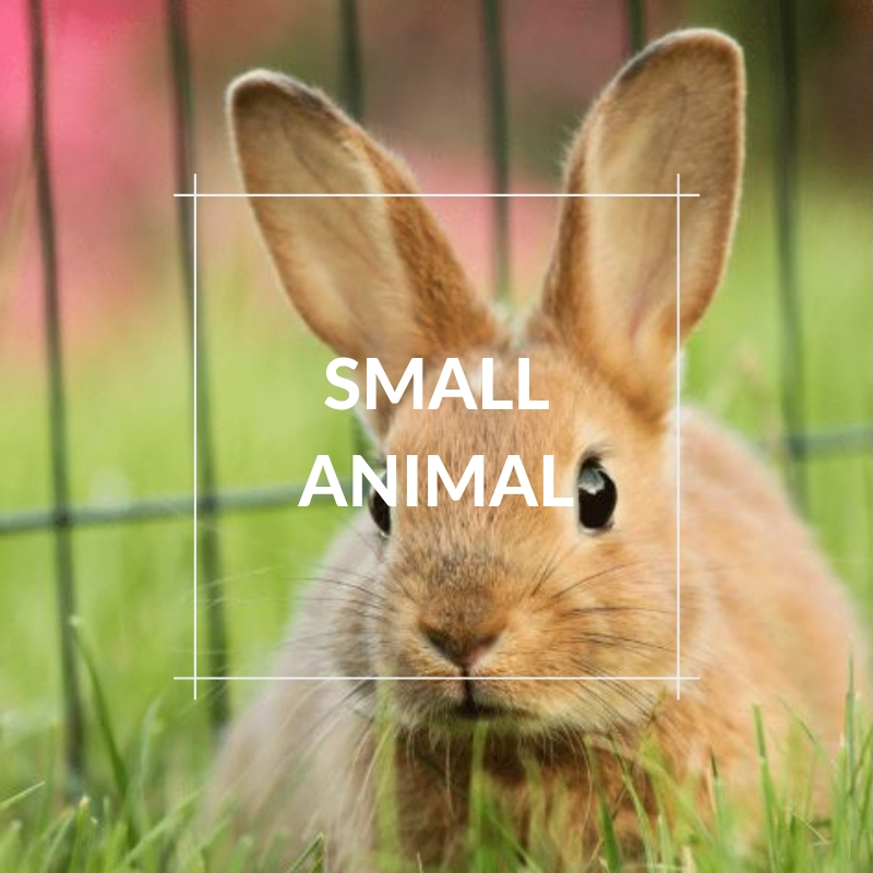 Pet Images - Small Animal Section
