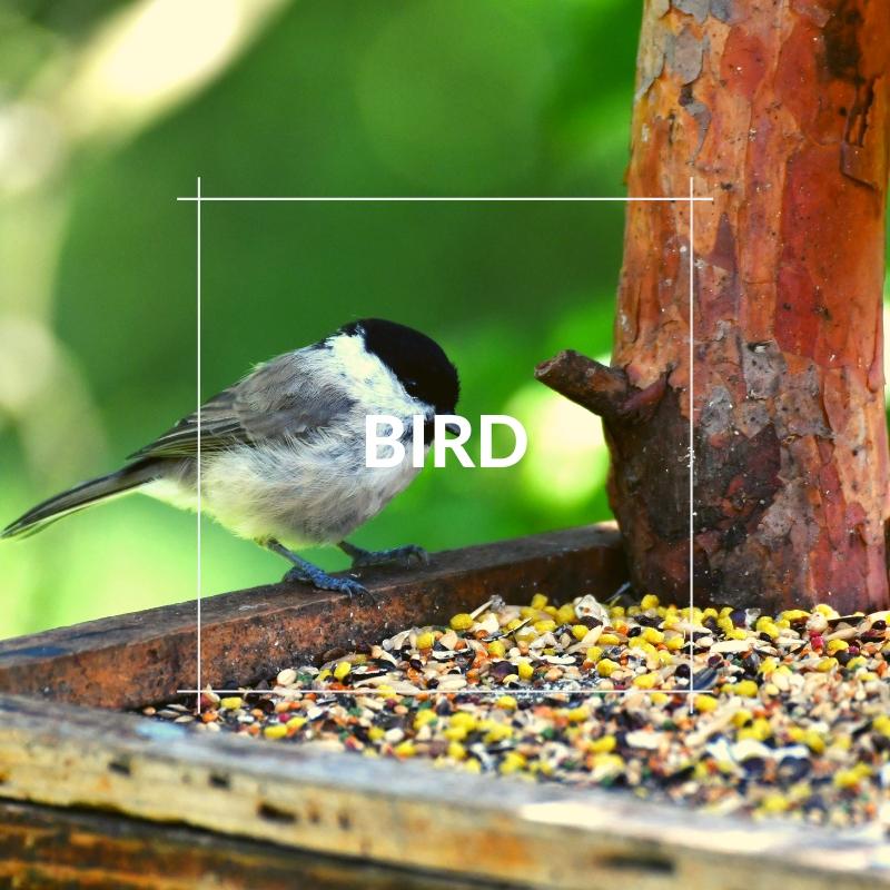 Pet Images - Bird Section