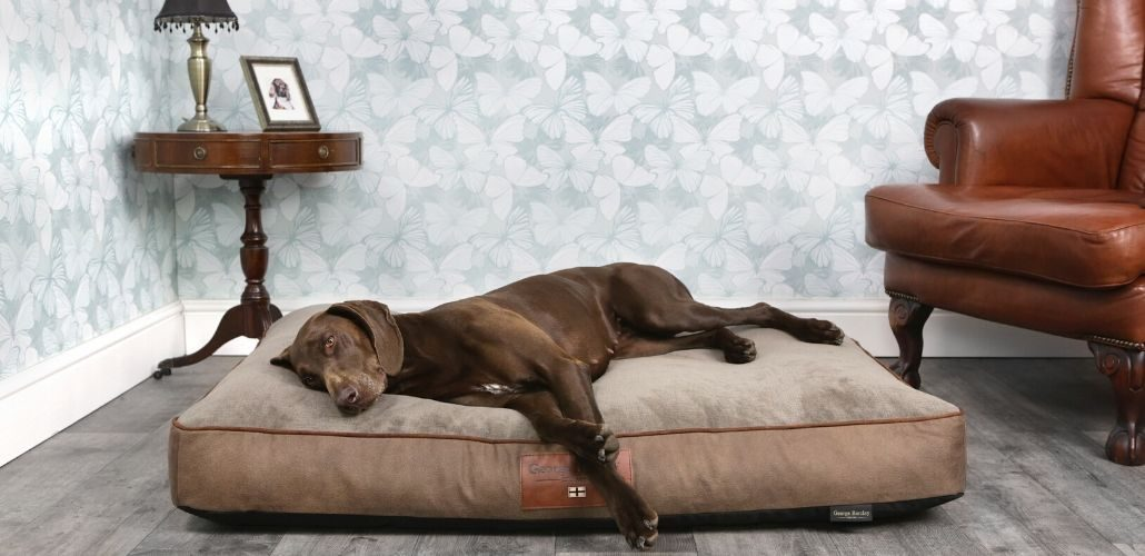 George Barclay Dog Cushion
